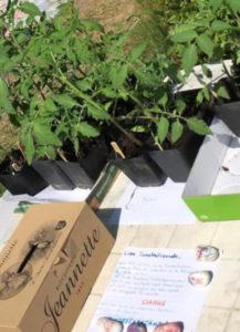 Tomatenbörse im Wald