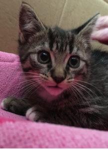 Katze am Hort gefunden